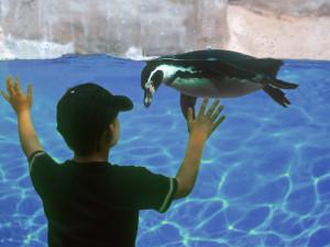 Mon animal préféré dans * KWIATKOWSKI Pascal animal-1-Kwiatkowski-mon-animal-préféré-Pascal-kwiatkowski1-300x225